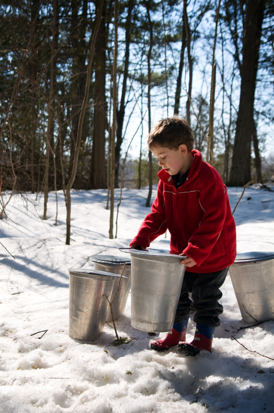 fb7da75ccf8 ... Trees You Can Tap to Make Maple Syrup for more detailed information.  Supplies For Maple Sugaring