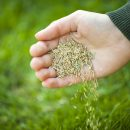 What To Know Before You Plant Grass Seed