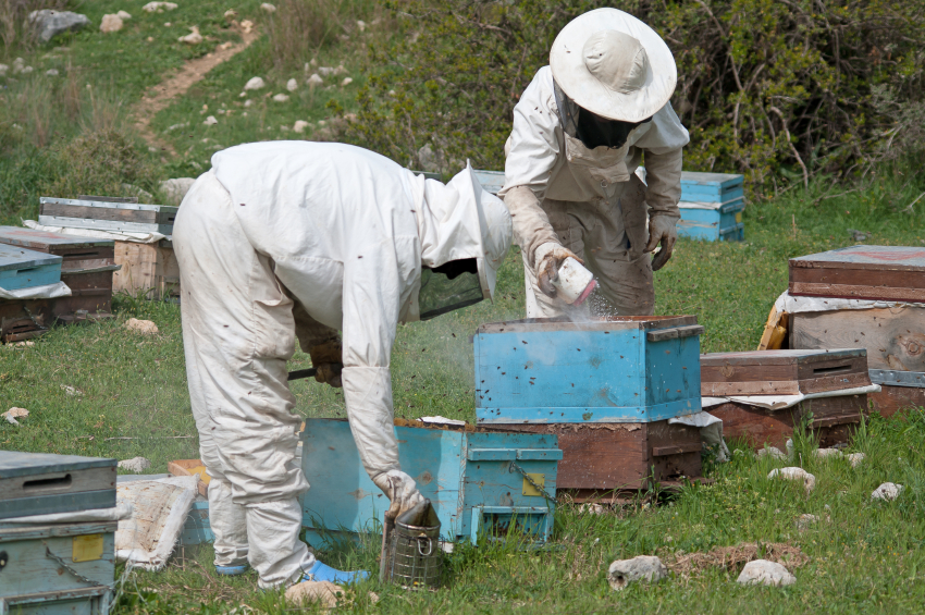 Bee Predators In Beekeeping Blain S Farm Amp Fleet Blog