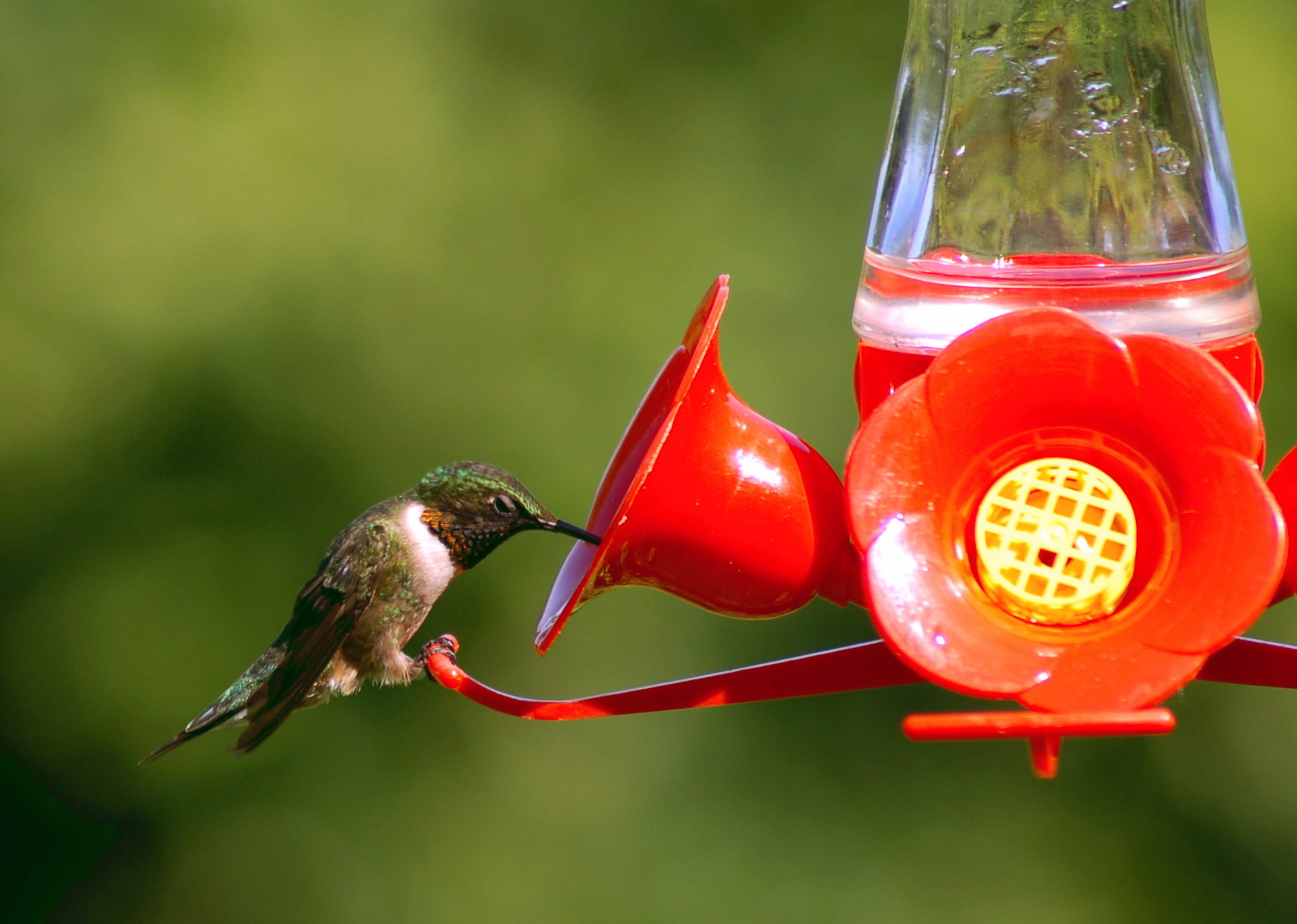 Hummingbird Feeders Guide Blain S Farm Amp Fleet Blog