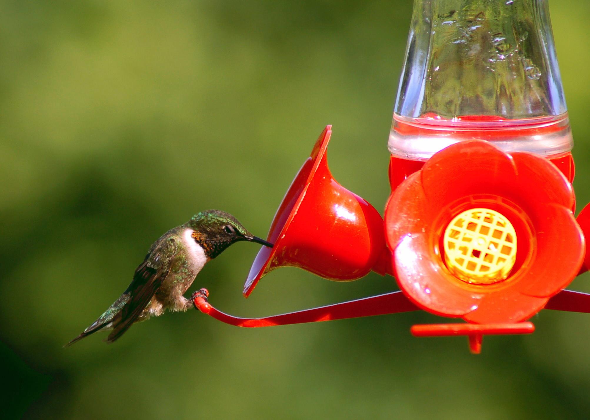 Hummingbird Feeders Guide | Blain's Farm & Fleet Blog