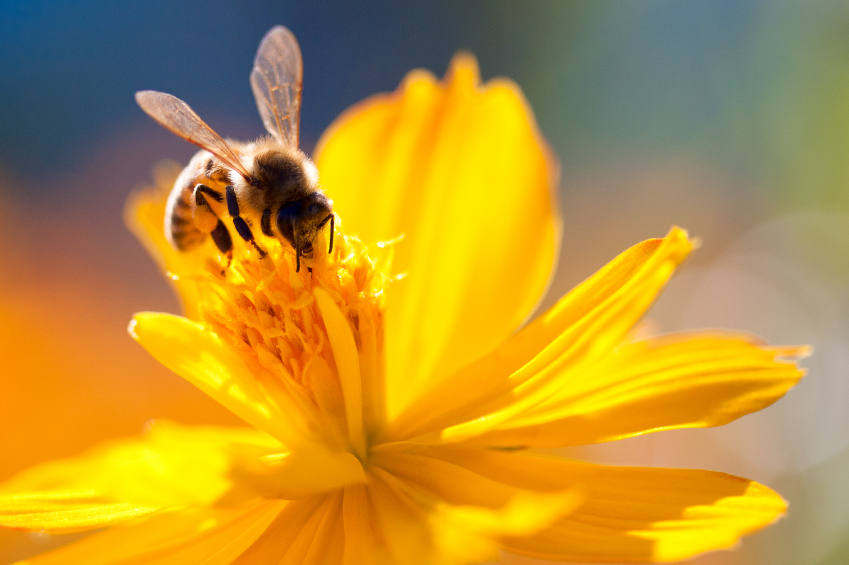 7 Plants To Help Honey Production