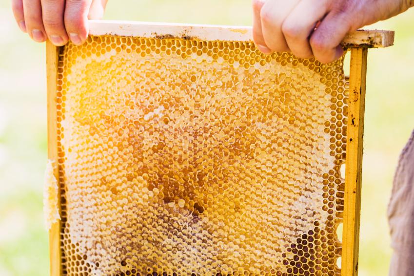Harvesting Honey From Your Hive | Blain's Farm & Fleet Blog