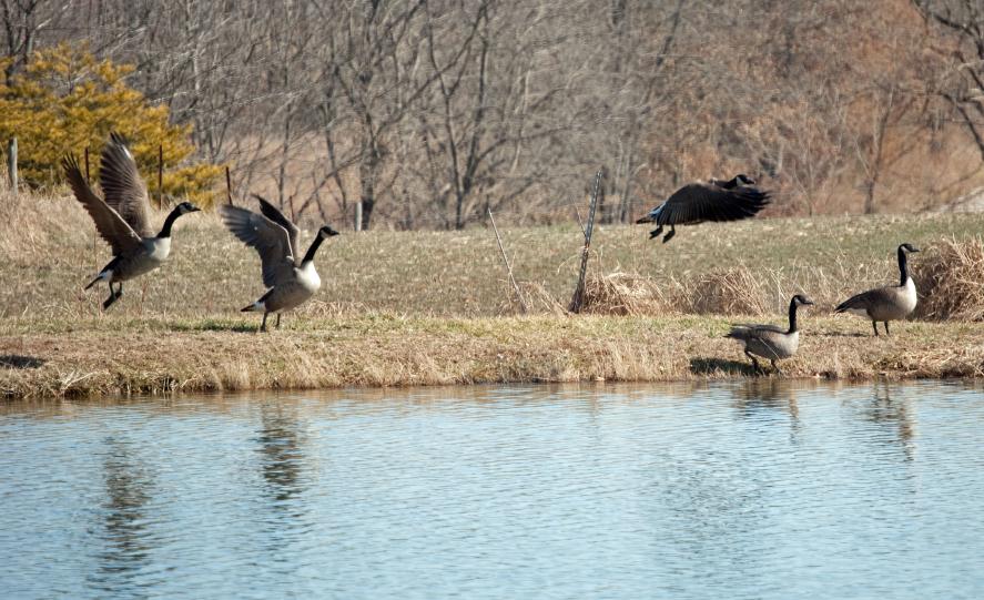 Goose Decoys Archives | Blain's Farm & Fleet Blog