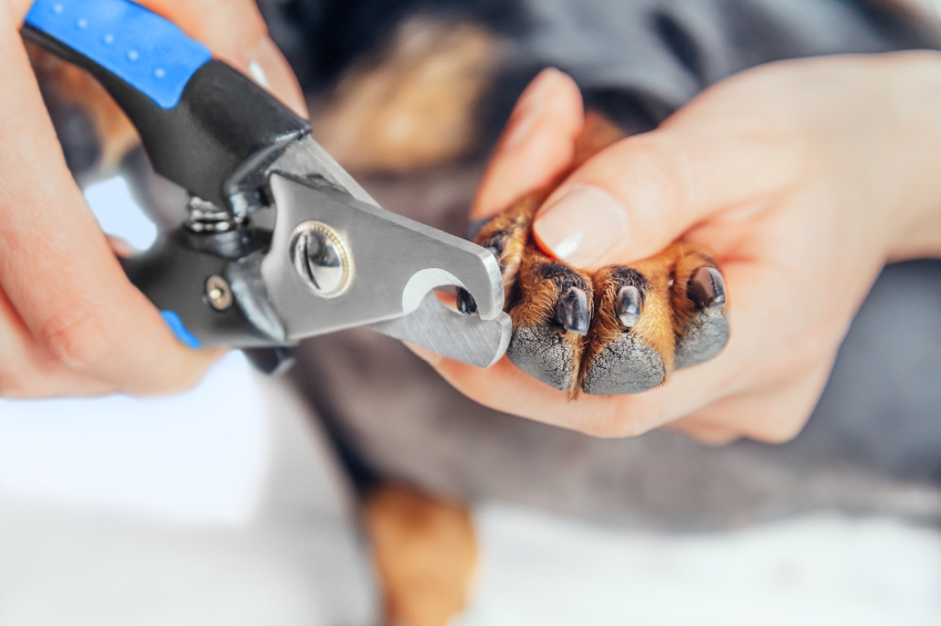 How To Use Dog Nail Clippers Blain S Farm Amp Fleet Blog