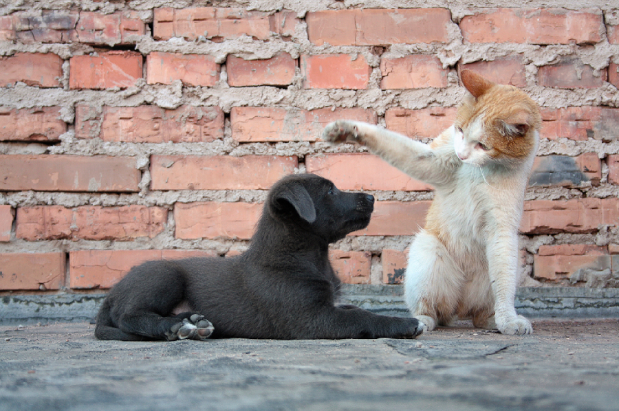 How To Properly Introduce A Cat To A Dog