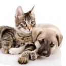 Blain's Farm & Fleet Pet Adoption Events