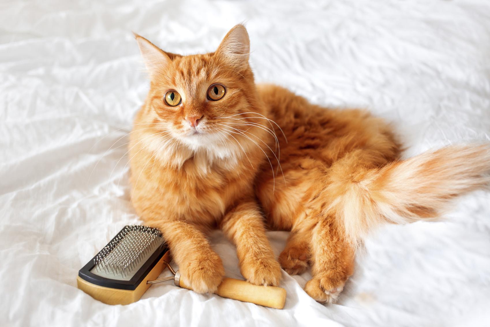 Cat grooming tips blain s farm amp fleet blog