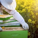 How to Start a New Bee Colony