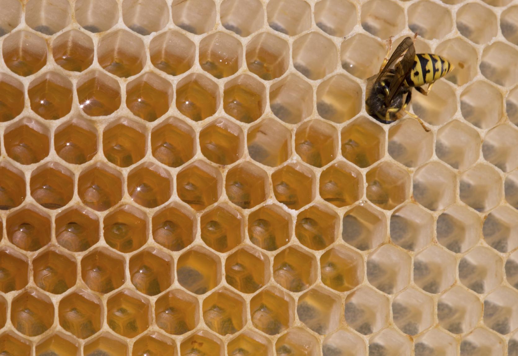 how to combat beehive robbing blain s farm fleet blog