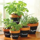 How to Make a Terracotta Window Herb Garden