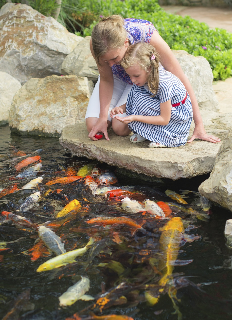 Pond fish for your backyard pond blain 39 s farm fleet blog for Types of pond design