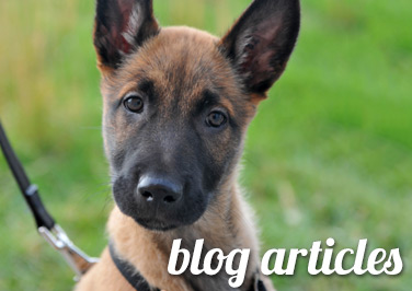 Dog Care Articles