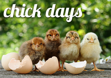 Chick Days at Blain's Farm & Fleet!