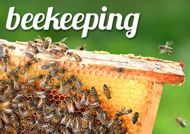 Shop Beekeeping Supplies at Blain's Farm & Fleet!