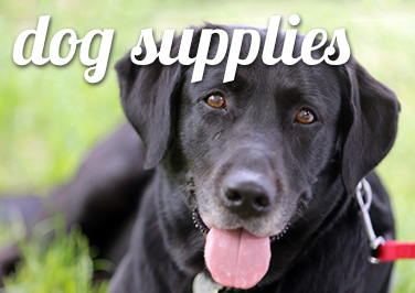 Shop Dog Supplies at Blain's Farm & Fleet!