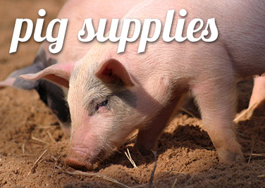 Shop Pig Supplies at Blain's Farm & Fleet!