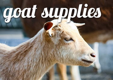 Shop Goat Supplies at Blain's Farm & Fleet!