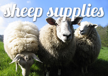Shop Sheep Supplies at Blain's Farm & Fleet!