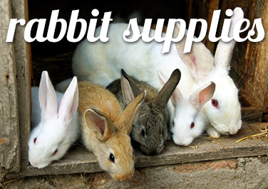 Shop Rabbit Supplies at Blain's Farm & Fleet!