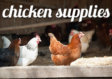 Shop Chicken Supplies at Blain's Farm & Fleet!