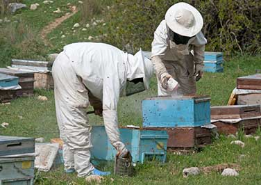 Beekeeping Smokers & Fuel