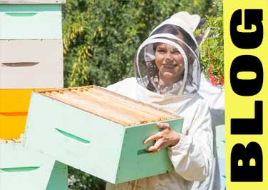 What Beekeeping Supplies Do I Need