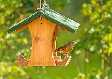 Shop All Bird Feeders