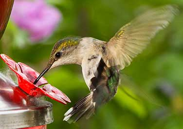 Shop Hummingbird Feeders