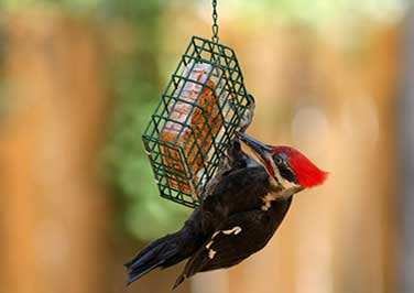 Shop Suet Feeders
