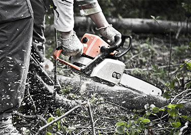 Chainsaws at Blain's Farm & Fleet