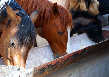 Selecting the Right Horse Feed
