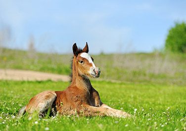 Feeding Foals Through Weaning Time