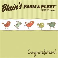 Congratulations (Birds)
